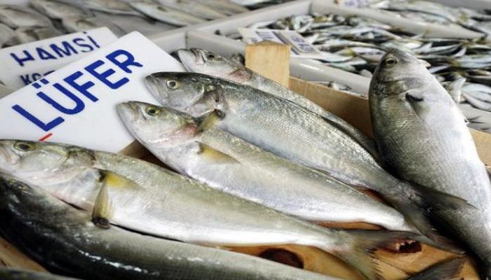 Lüfer bolluğu balıkçıları sevindirdi