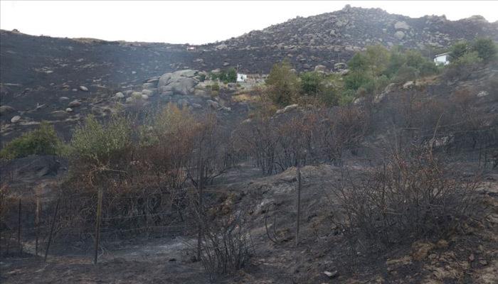 Marmara Adası'ndaki orman yangını soruşturmasında yeni gözaltı