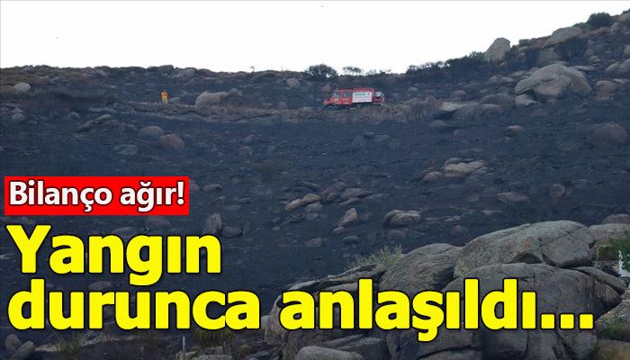 Marmara Adası'ndaki yangının boyutu gün ağarınca anlaşıldı