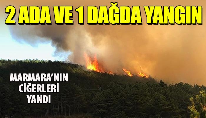 Marmara'nın ciğerleri yanıyor