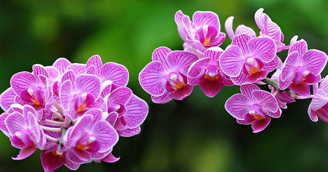Orkidelerin nesli tükenebilir