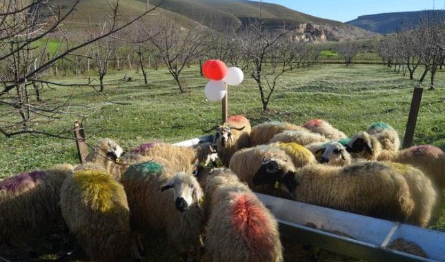 Siirt'te genç çiftçilere 16 milyon 590 bin hibe desteği verildi