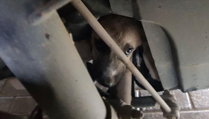 Sıkışan yavru köpeği itfaiyeci kurtardı