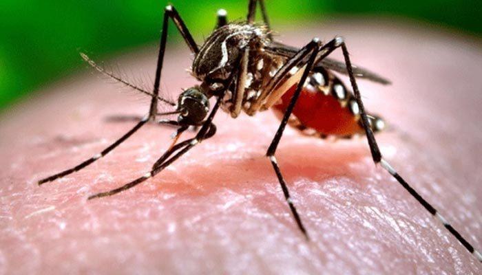 Sivrisinek ısırığını hafife almayın