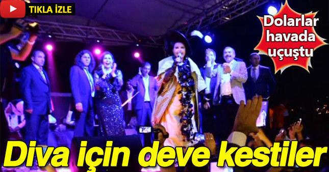 Sünnet düğününde Diva için deve kesildi