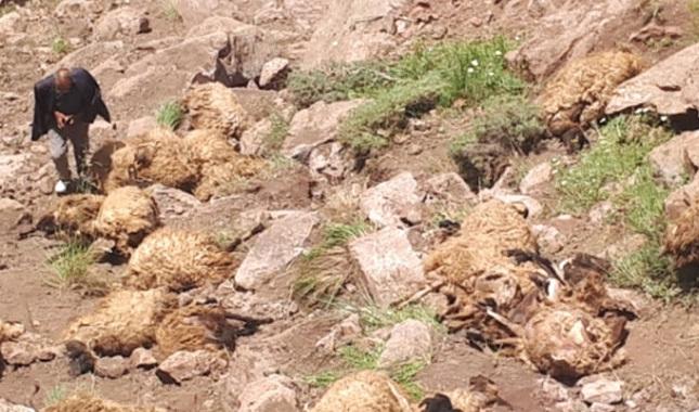 Sürü psikolojisi 500 koyunu telef etti