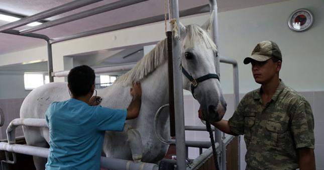 TSK'da at, beygir ve katır ihtiyacı var
