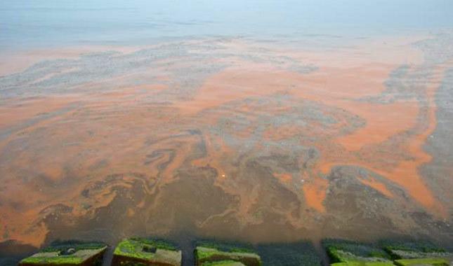 Tekirdağ sahilini turuncu renk sardı