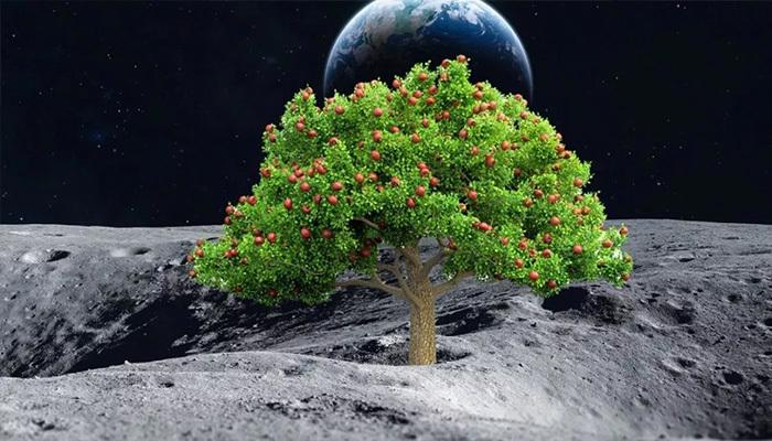 Uzayda biber yetiştirilecek