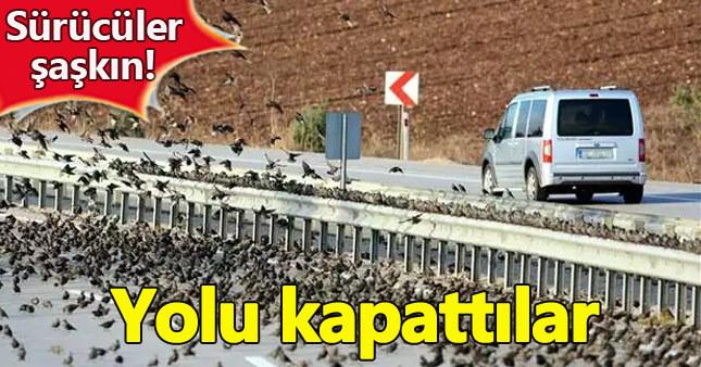 Yolu kapatan sığırcıklar sürücüleri zorladı