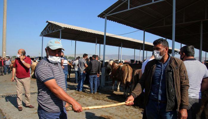 """Sivas'ta kurbanlıklar görücüye çıktı, """"değnekle pazarlık"""" başladı"""