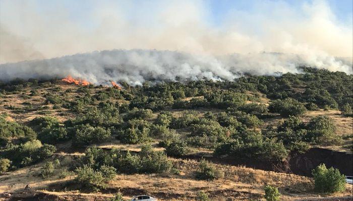 Elazığ'da çıkan orman yangınına müdahale ediliyor