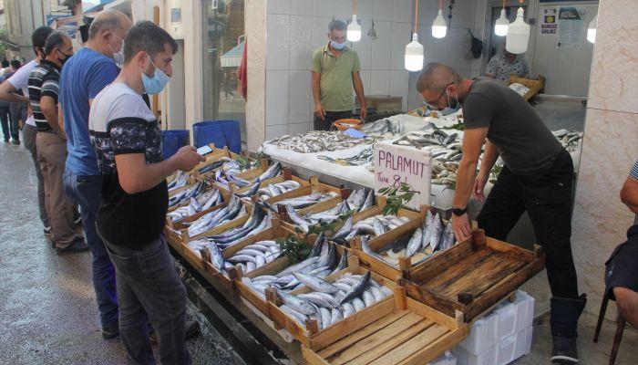 Sinop'ta denize açılan balıkçılar limana 600 kasa palamutla döndü