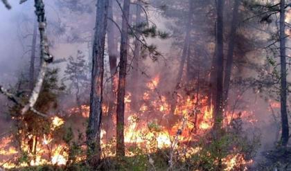 Orman yangını 5 buçuk saat sonra kontrol altına alındı