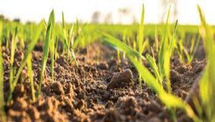 Temiz su kaynağının yüzde 73'ü tarımsal üretimde kullanılıyor