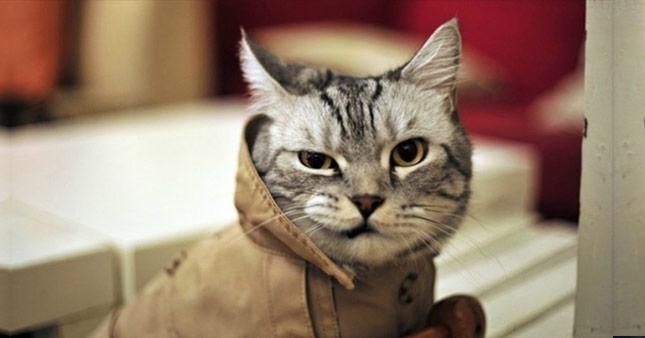 Mart ayının gelmesine sevinen kedilerden 12 Caps