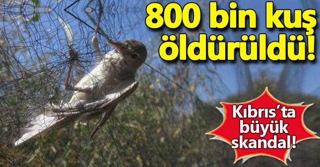 Kıbrıs'ta 800 bin kuş öldürüldü