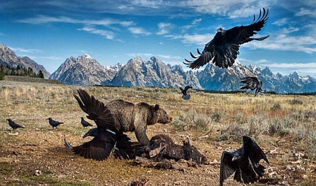 2017 Vahşi Yaşam Fotoğraf yarışmasının finalistleri belli oldu. A24