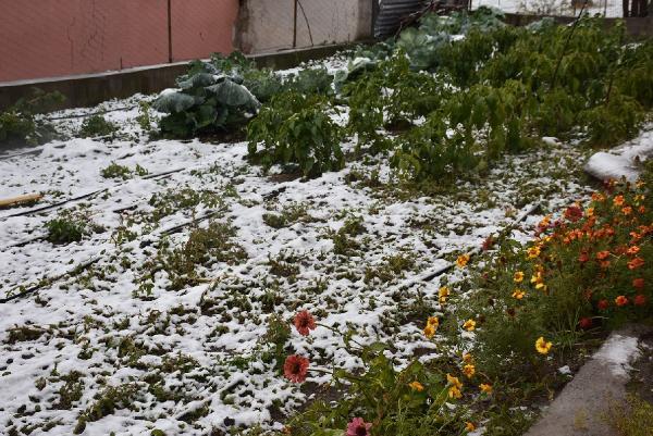 Kar çilesi başladı! 20 cm oldu A24