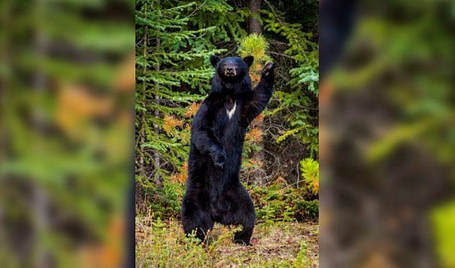 Dünyanın en eğlenceli vahşi yaşam fotoğrafları A24