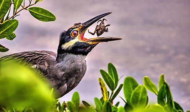 National Geographic 2017'nin en iyi vahşi yaşam fotoğraflarını paylaştı...