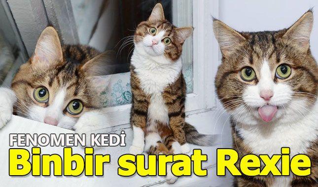 İnternette fenomen olan evcil hayvanların sonuncusu: Binbir surat Rexie A24